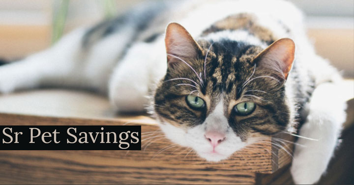 cat-pet-savings-vet