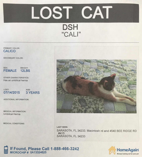 lost-calico-cat